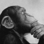 chimpace-pensativo1